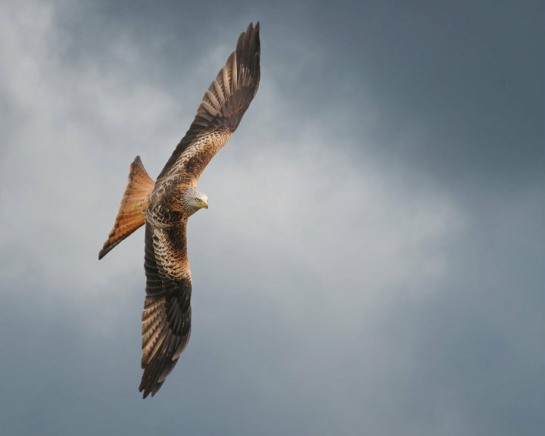 Image from www.redkitewales.co.uk